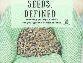 DIY Garden Minute Ep. 27: Heirloom Seeds, Defined!