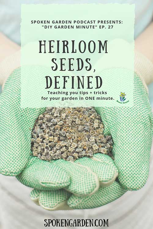 "A gardener wearing green gardening gloves and holding vegetable seeds in Spoken Garden's ""Heirloom Seeds, Defined"" podcast advertisement"