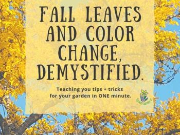 DIY Garden Minute Ep. 22: Fall Leaves and Color Change, Demystified!