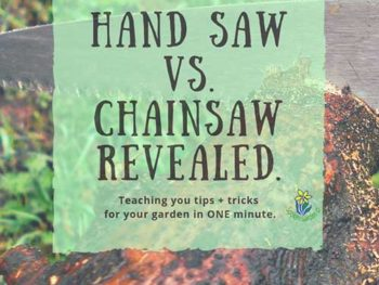 DIY Garden Minute Ep. 23: Hand Saw vs Chainsaw, Revealed
