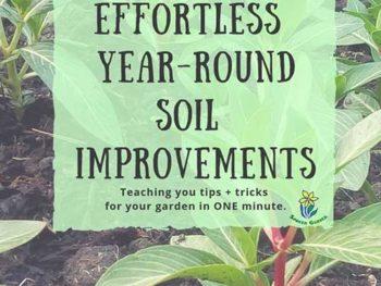 DIY Garden Minute Ep. 24: Effortless Year-Round Soil Improvements