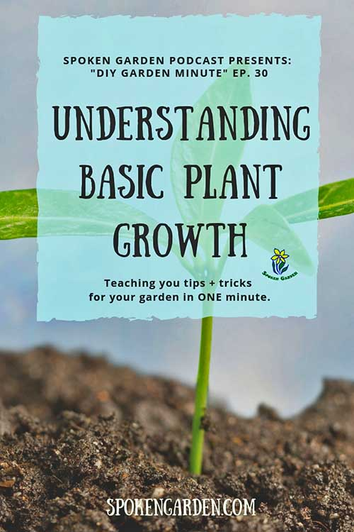 "A young seedling is growing in the ground as advertised in Spoken Garden's ""Understanding Basic Plant Growth"" podcast"