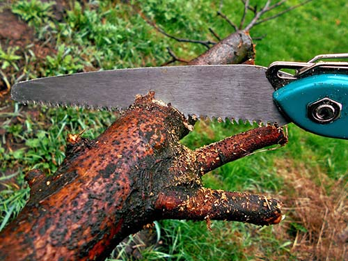 The best hand saw for pruning