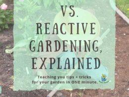 DIY Garden Minute Ep. 43: Proactive vs. Reactive Garden Strategy, Explained!