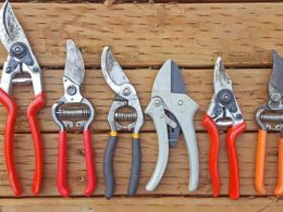 Best Pruning Tools: Prune Confidently With This List