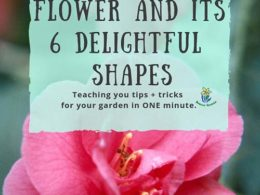 The Camellia Flower and Its 6 Delightful Shapes: DIY Garden Minute Ep. 47