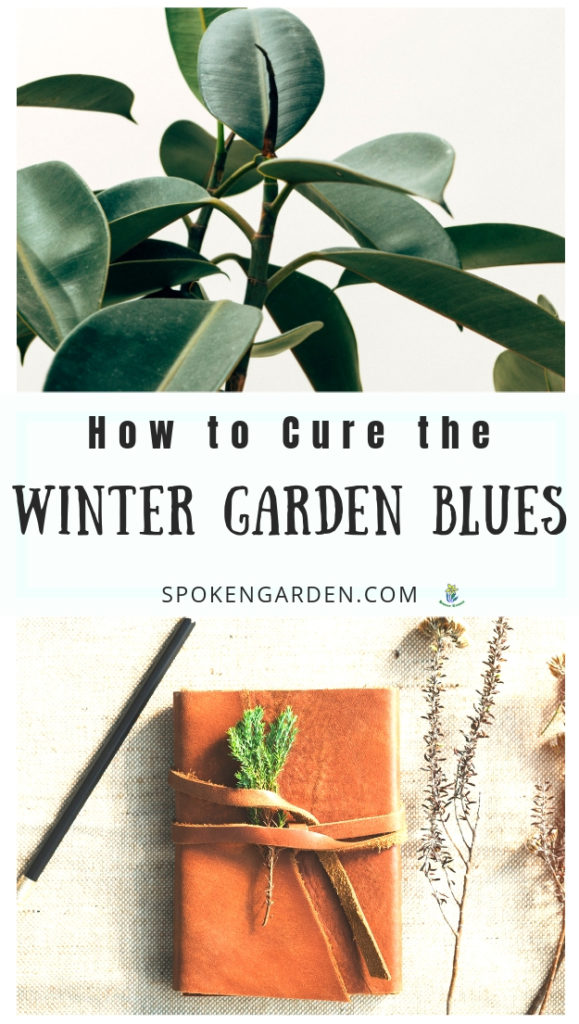 A houseplant and a journal advertised as 2 ways to beat the winter garden blues by Spoken Garden