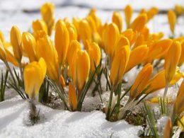 7 Winter Flowering Plants to Liven Up Your Garden! – DIY Garden Minute Ep. 50