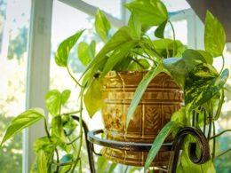 3 Best Indoor Plants and Their Life-Changing Health Benefits: DIY Garden Minute Ep. 46