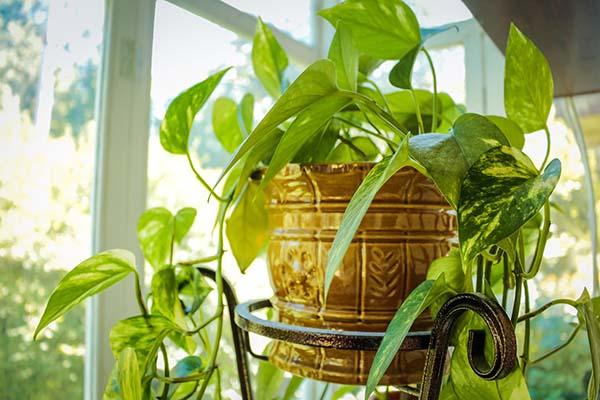 Best Indoor house plant post by Spoken Garden