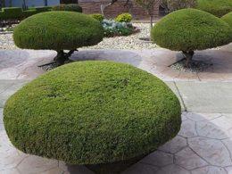 Pruning Basics: Thinning Cuts vs. Heading Cuts – DIY Garden Minute Ep. 51