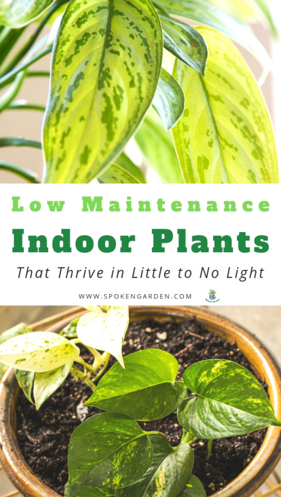 Examples of low maintenance indoor plants with large green leaves with text overlay in Spoken Garden's podcast advertisement