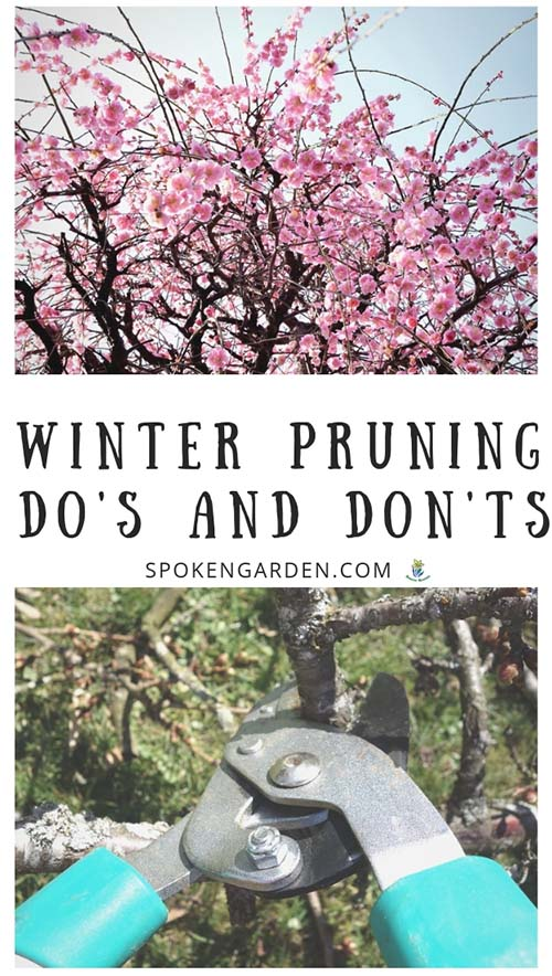 Late winter Cherry tree blossoms and pair of loppers with text overlay in Spoken Garden's podcast advertisement
