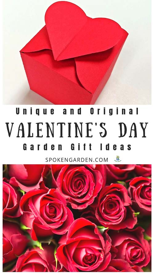 Red Valentine's day present and red roses with text overlay in Spoken Garden's podcast advertisement