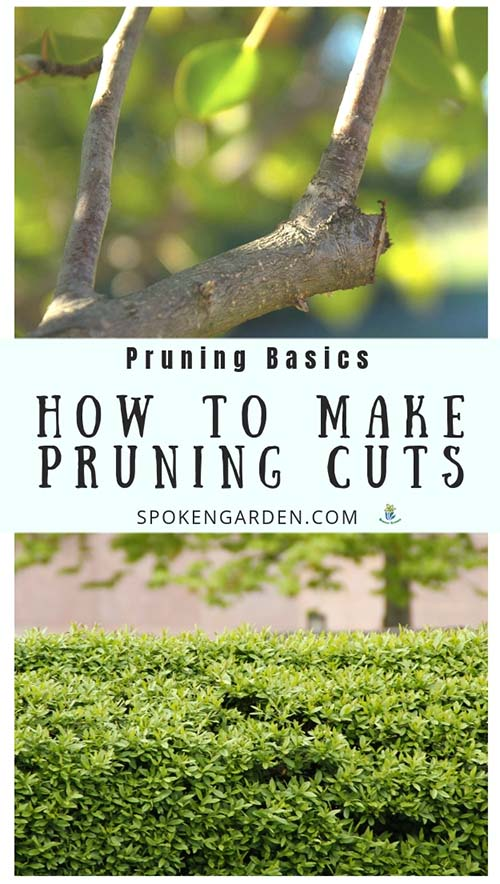 A tree branch and a shrub both in need of pruning cuts with text overlay in Spoken Garden's podcast advertisement