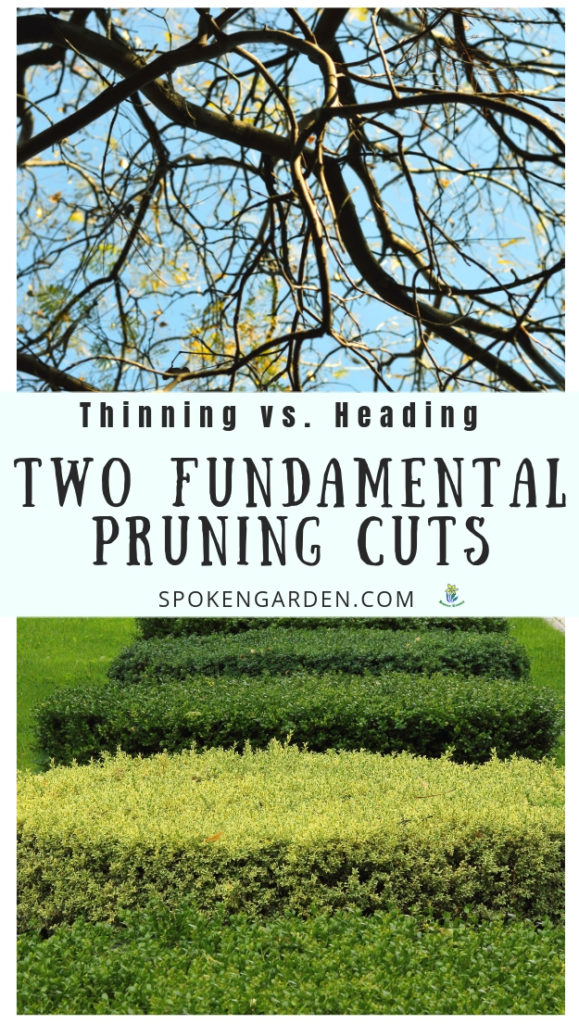 A tree and hedges that need pruning cuts with text overlay in Spoken Garden's podcast advertisement
