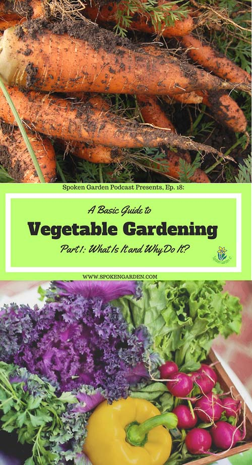 Carrots and mixed garden vegetables with text overlay in Spoken Garden's podcast advertisement