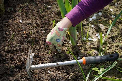 Pulling weeds in the garden in Spoken Garden's podcast