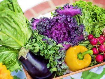 Ep. 18: Vegetable Gardening Basics Part 1