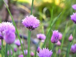 What is Permaculture Gardening? – DIY Garden Minute Ep. 69