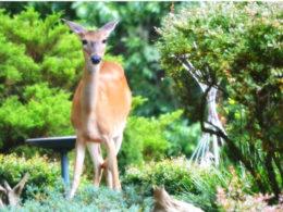 What Plants are Deer-Resistant? – DIY Garden Minute Ep. 82