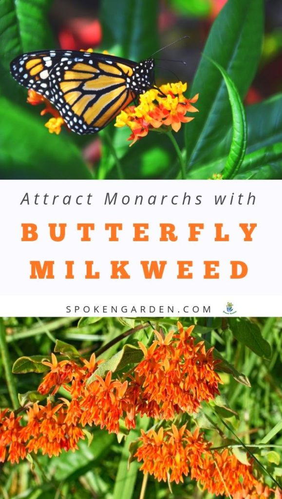 Monarch butterfly and milkweed with text overlay in Spoken Garden's podcast advertisement