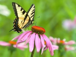Best Butterfly Plants for Attracting Butterflies To Your Garden (And Keeping Them Around)