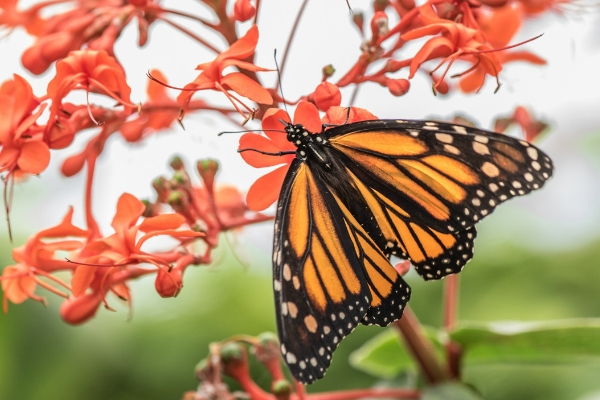 Ep. 35: Best Flowers For Attracting Butterflies to Your ...