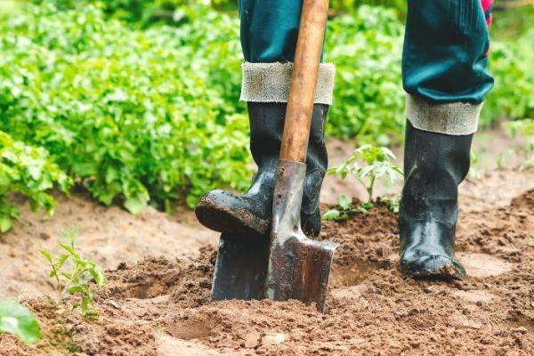 Man's boots and garden shovel