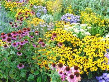 Summer-blooming perennials