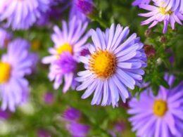 Pruning vs Deadheading, Revealed – DIY Garden Minute Ep. 2