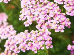 Drought-Tolerant Perennials That Bloom All Summer – DIY Garden Minute Ep. 97