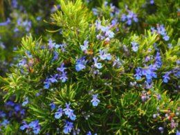 Ep. 38 – Drought-Tolerant Perennials Guaranteed to Brighten Up Your Garden.