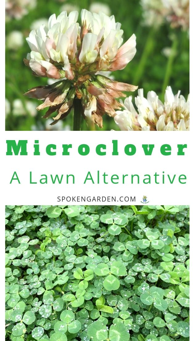 Microclover and lawn alternatives with text overlay