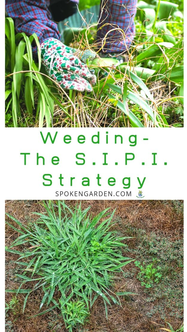Pulling weeds with the SIPI strategy