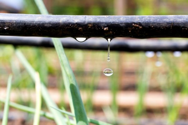 Water-efficient landscaping option- soaker or drip hoses