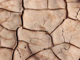 Drought-Tolerance vs. Drought-Resistance – DIY Garden Minute Ep. 105