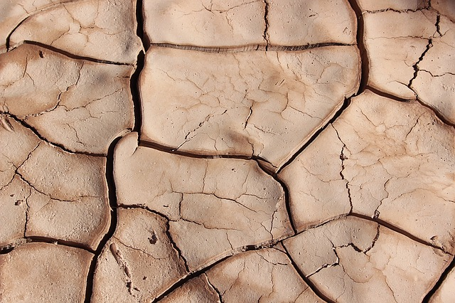 drought-resistance and plants
