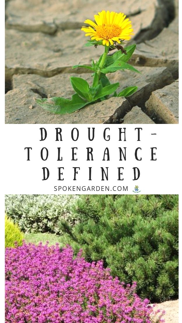 drought-tolerance and landscaping with text overlay