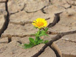 Drought-Tolerance Defined – DIY Garden Minute Ep. 104