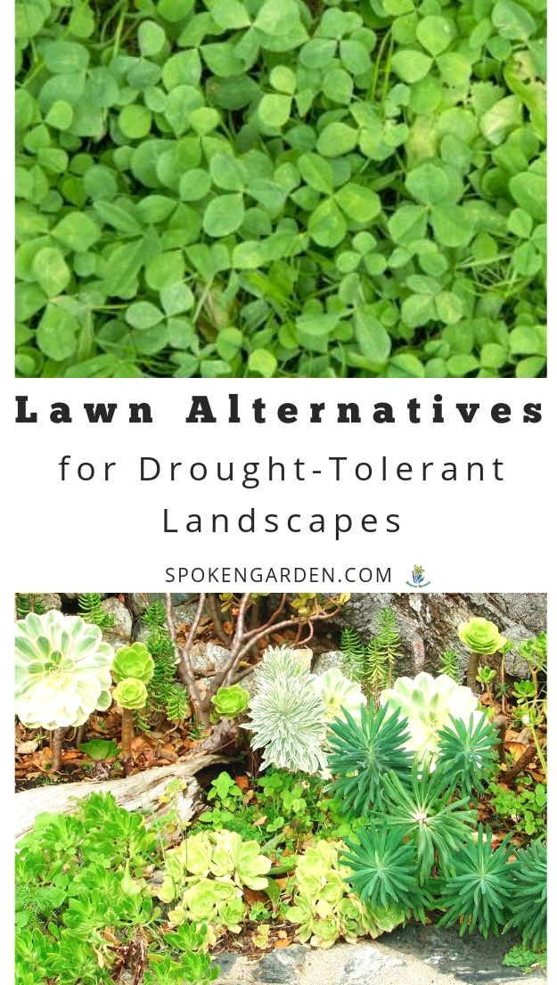 Lawn alternatives and landscaping with text overlay