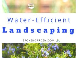 Ep. 40 – Using Water-Efficient Landscaping to Save You Time (and Money)