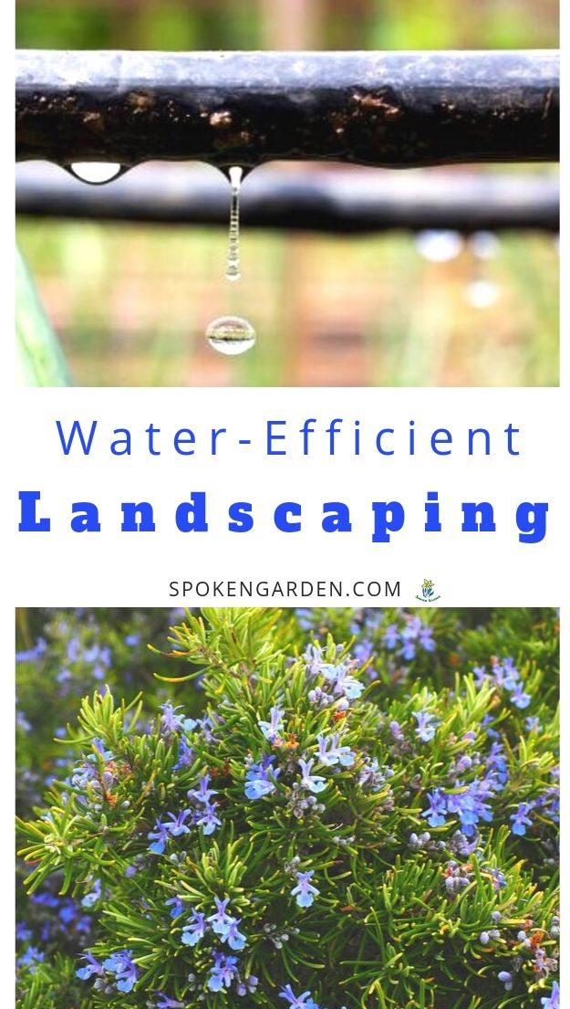 Water-effifient landscaping options