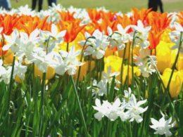 Quick Tips For Adding Flowering Bulbs to Your Garden – DIY Garden Minute Ep. 112