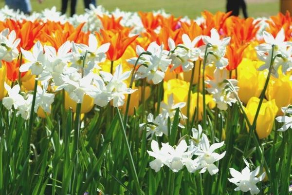 Tips for best ways to plant bulbs