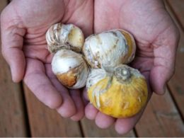Bulb Planting Mistakes – DIY Garden Minute Ep. 111