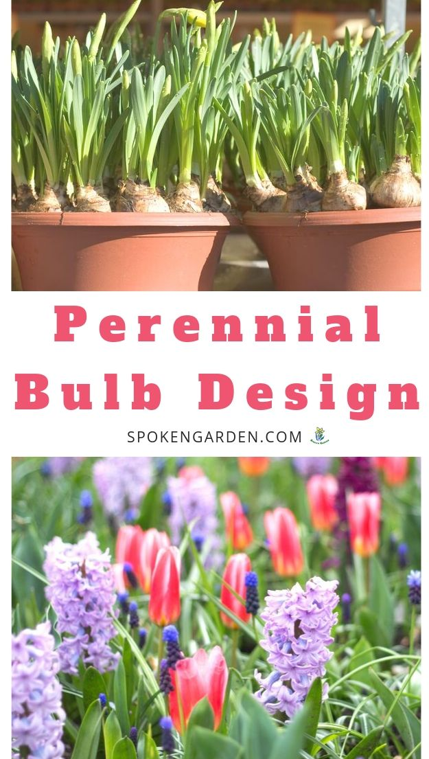 Adding flowering bulbs to your yard