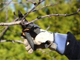 Pruning Basics: The Benefits of Learning to Prune Your Plants – DIY Garden Minute Ep. 118