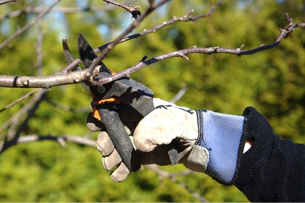 Hand pruners are a benefit to pruning