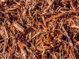 Alternatives to Beauty Bark Mulch – DIY Garden Minute Ep. 119